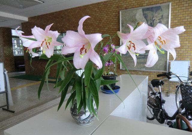 ハナショウブが玄関ホールを彩り、まぼろしの花ササユリのとてもいい香りがします