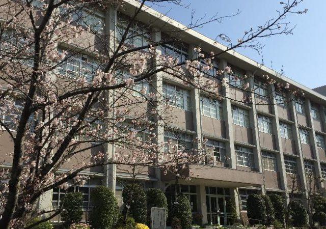 3月末、桜が咲いて新入生を迎える準備が整いました